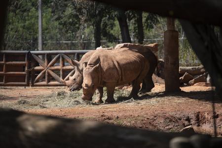white rhino in zoo Standard-Bild - 119095078