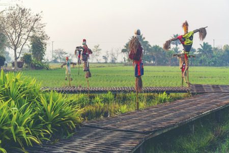 Paddy rice field in Thailand Stock Photo