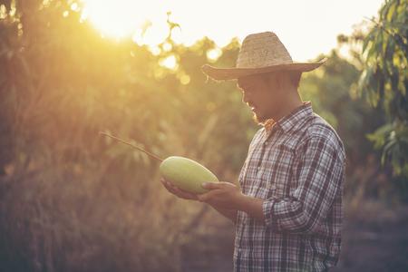 Jonge slimme boer, moderne mangoboerderij, fruit uit Thailand Stockfoto