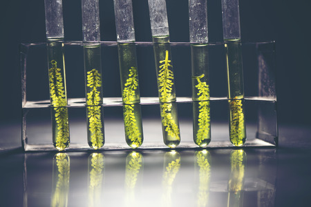 biofuel laboratory with algae, research experiments, educational demonstrations in medical and clinical laboratories Stock Photo