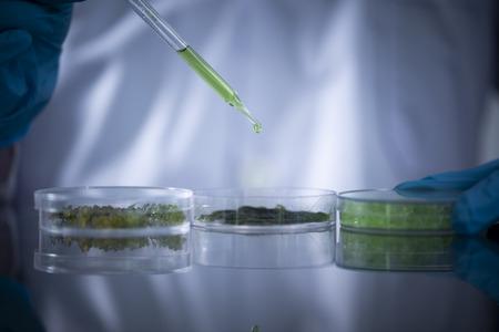 Photobioreaktor in der Laboralgenkraftstoff-Biokraftstoffindustrie. Algentreibstoff