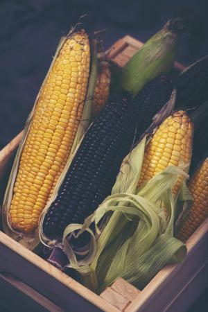 Multi-colored corn in the basket 스톡 콘텐츠
