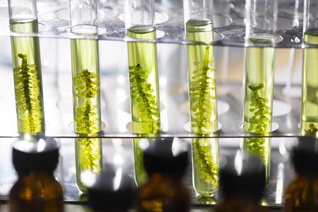 Fotobioreaktor w laboratorium biopaliwa z alg, Paliwo z alg, Badania alg w laboratoriach przemysłowych Zdjęcie Seryjne
