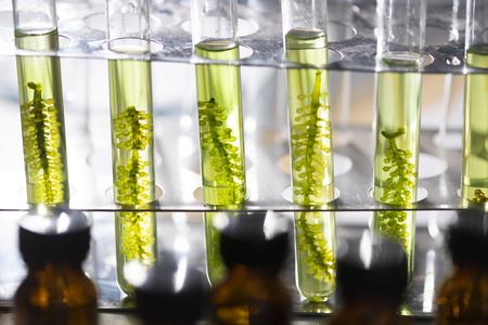 Photobioreaktor in der Laboralgenkraftstoff-Biokraftstoffindustrie, Algenkraftstoff, Algenforschung in Industrielabors Standard-Bild
