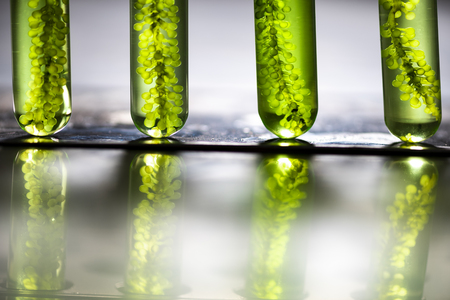 Biodiesel production is the process of producing the biofuel, biodiesel, in laboratory Stock Photo