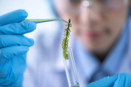 Los científicos están desarrollando investigaciones sobre algas. Bioenergía, biocombustible, investigación energética