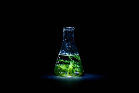 algae seaweed research, biofuel  industry science, sustainable concept Reklamní fotografie