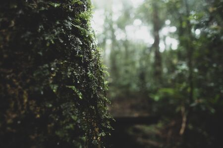 view of tropical forest, Khao Yai National Park, Thailand 写真素材