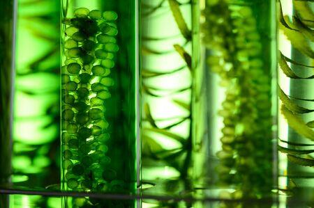 Texturhintergrund von Algen, Forschung in Labors, biotechnologisches Wissenschaftskonzept