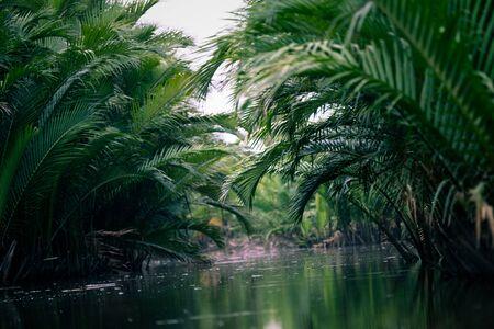 Nypa fruticans, Nypa fruticans Wurmb, mangrove forest Stock fotó
