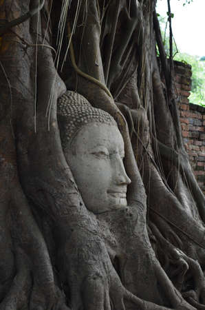 Buddha head encased in tree roots at the temple of Wat Mahatat in Ayutthaya, Thailand photo