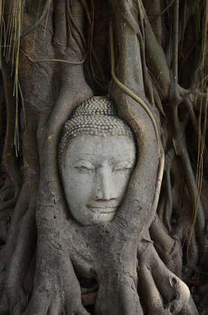 Buddha head encased in tree roots at the temple of Wat Mahatat photo