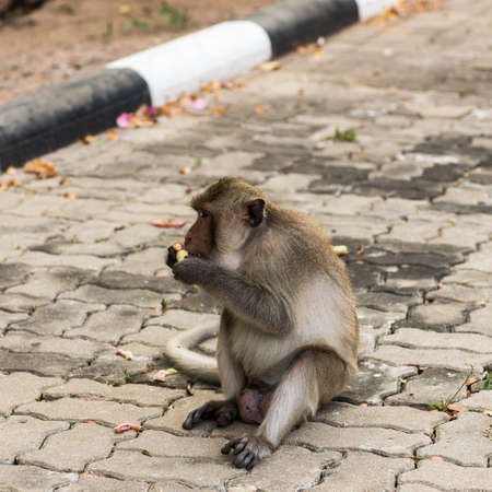 The monkey sitting on the side of the road,crazy monkey waiting for some food.young brown monkey in outdoor car park.