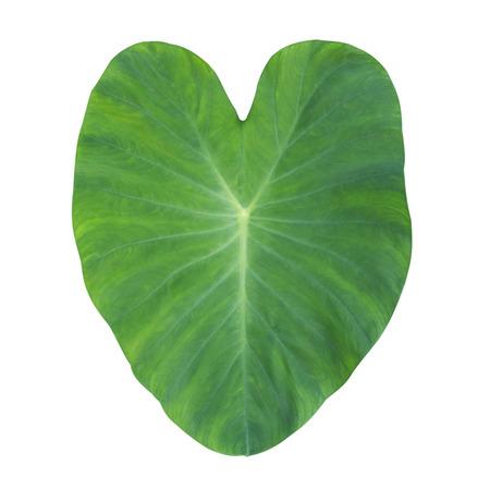 Love heart valentine Blattsymbol romantische Natur Standard-Bild - 41649984