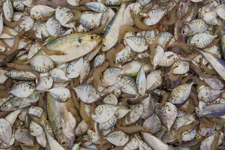 raw material: fish seafood market fishing shrimps meat fisherman sea raw material tuna Stock Photo
