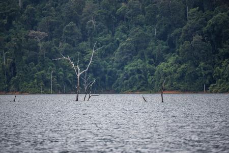 Natur im Damm Standard-Bild - 42247354