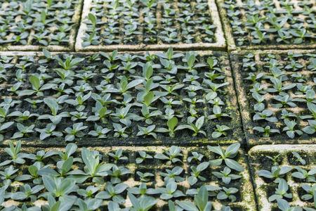 Jungpflanzen auf dem Gebiet Standard-Bild - 44055438