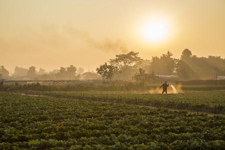 Erdbeerplantagen in den Morgen Standard-Bild - 44055449