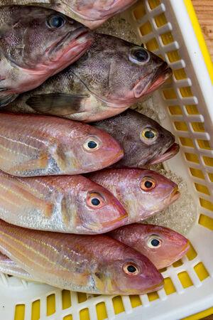 shopping basket: Fresh sea fish in shopping basket, Seafood