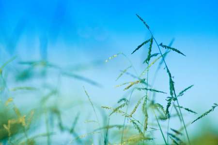 Preview Save to a lightbox  Find Similar Images  Share Stock Photo: Green Grass with blue sky background Stock Photo