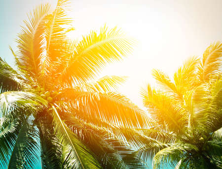 coconut palm tree for summer background Фото со стока