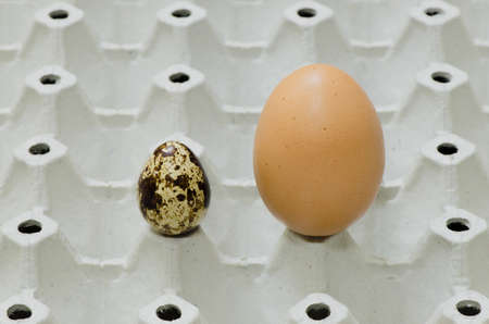 unequal: Quail egg and chicken egg of unequal size are placed on the tray