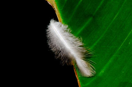 waft: Feather on the leaves in the background black Stock Photo