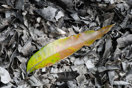 One green leaves on the gray ash look no life photo