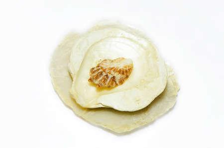 overlap: sea shells overlap isolated on white background Stock Photo