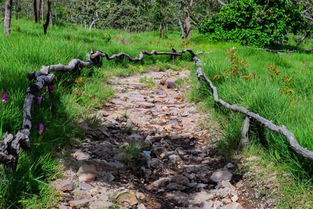 Gelander Holz Gehweg Im Garten Lizenzfreie Fotos Bilder Und Stock