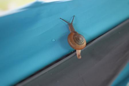 Snail on blue blur background