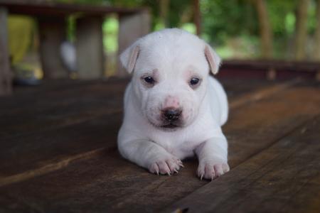small cute puppy dog Zdjęcie Seryjne - 89907520