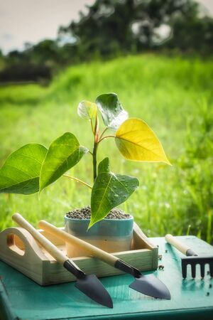 growth planting trees in pots Stock Photo