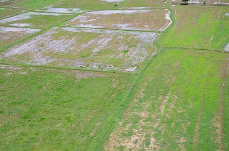 Rice filed landscape seen from above kanchanaburi Thailand