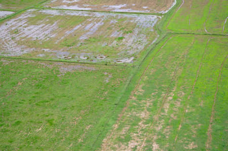 Rice filed landscape seen from above; kanchanaburi Thailand