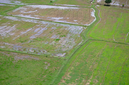 Rice field landscape seen from above kanchanaburi Thailand