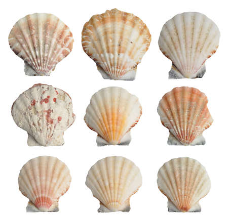 Collection of seashells isolated on white background  Standard-Bild
