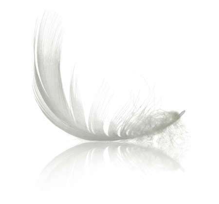 White swan feather with reflection. Isolated on white background