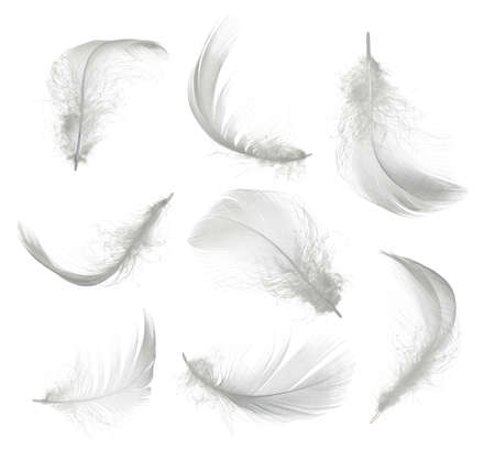 Collection of white feather isolated on white background Foto de archivo