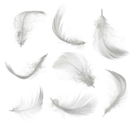 Verzameling van witte veer geïsoleerd op een witte achtergrond Stockfoto
