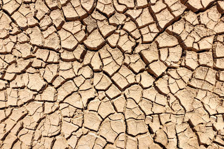 Cracks of the dried soil background; Stock Photo