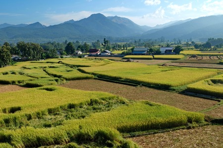 ricefield: Green ricefield and Mountain with the bluesky Stock Photo