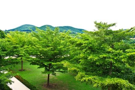 green garden Stock Photo - 7453578