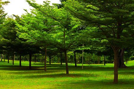 green garden Stock Photo - 7453579