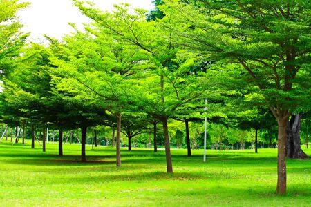 green tree Stock Photo - 7453583