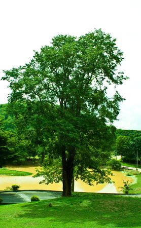 green tree Stock Photo - 7476325