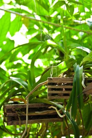 botanic: botanic Stock Photo