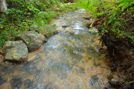 moisture: The moisture of the forest Stock Photo