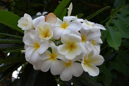 gush: Gush home flower Stock Photo