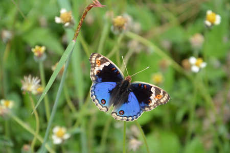 black and blue: Black Blue butterfly